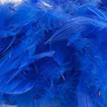 Royal Blue Feathers 50g